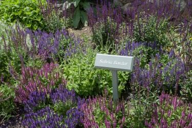 JJH-Herb-Garden-2